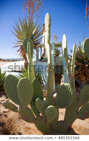 kaktüs · Namibya · kasaba · çöl · Afrika · gökyüzü - stok fotoğraf © imagex