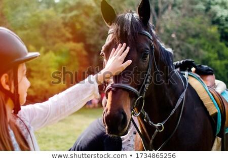 Női kéz ölelkezés gyönyörű ló istálló Stock fotó © stevanovicigor