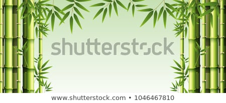 Bambus Baum Text Rahmen Rechteck dekoriert Stock foto © Soleil