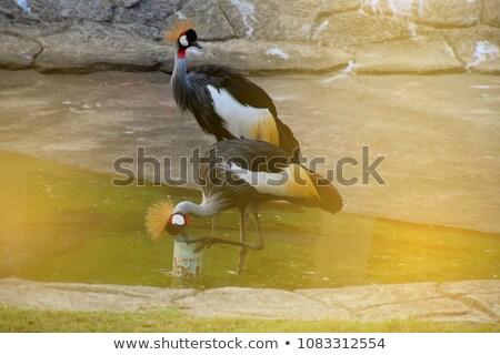 Magnífico africano Águia olho cara natureza Foto stock © chrisga