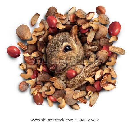 Squirrel Nut Burst Stock photo © Lightsource