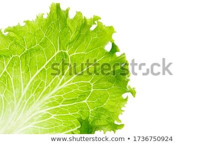 gyűjtemény · izolált · fehér · zöld · saláta · kert - stock fotó © entazist