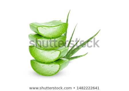 Aloe Zweig frischen isoliert weiß Wasser Stock foto © neirfy