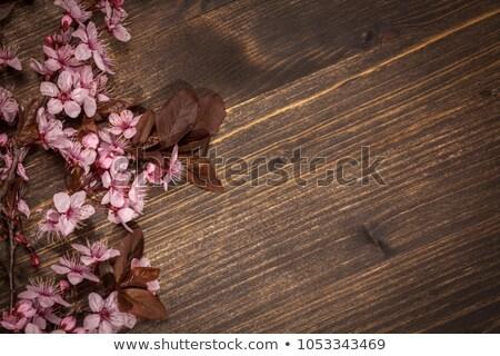 Kiraz çiçeği rustik ahşap bahar mavi ağaç Stok fotoğraf © IvicaNS