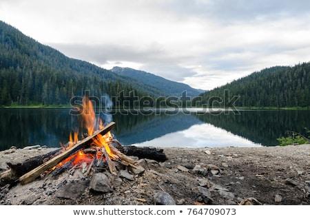 fogueira · água · floresta · noite · céu · madeira - foto stock © juhku