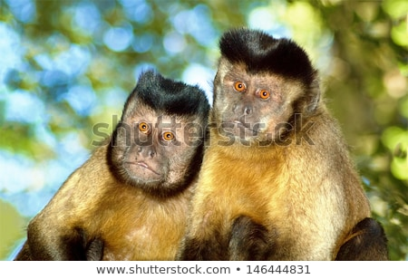 Marrom macaco grama floresta cabelo jovem Foto stock © chris2766