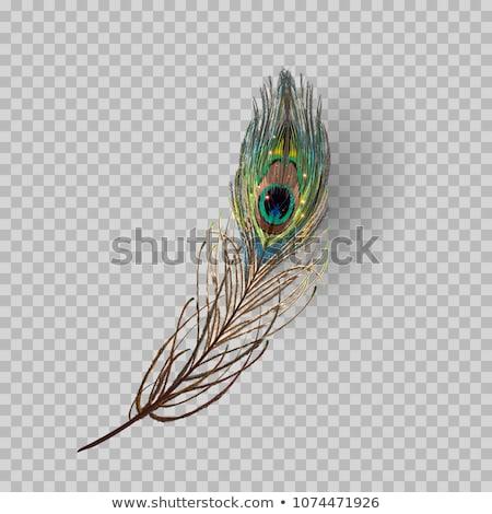 Pavão pena isolado ilustração vetor formato Foto stock © orensila