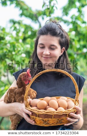 Galinha cesta ovos de páscoa ilustração Foto stock © orensila