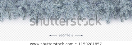 spruce branch in hoarfrost stock photo © kotenko