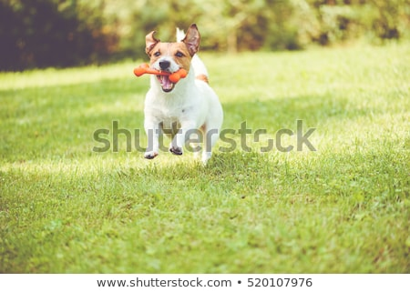 kutya · játszik · folt · illusztráció · citromsárga · labrador · retriever - stock fotó © iconify