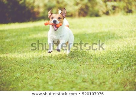 hond · spelen · plek · illustratie · Geel · labrador · retriever - stockfoto © iconify