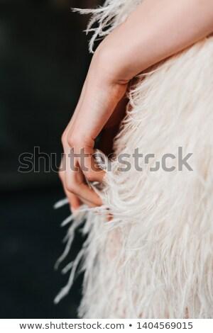 Hermosa cisne elegancia agua fuera ala Foto stock © HunterX