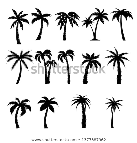 Doodle Palm icon Stock photo © pakete