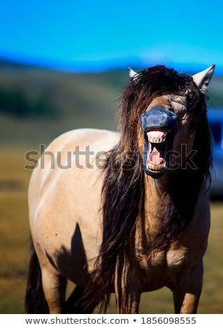 horse ride at sunset Stock photo © adrenalina