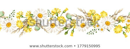 Kwiatowy granicy żółte kwiaty ilustracja biały zielone Zdjęcia stock © bluering