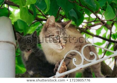 Cica anya anyaság macska baba vászon Stock fotó © cosma