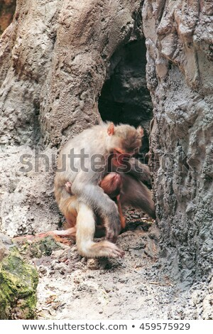 Stock photo: girl at the zoo with mischievous monkeys
