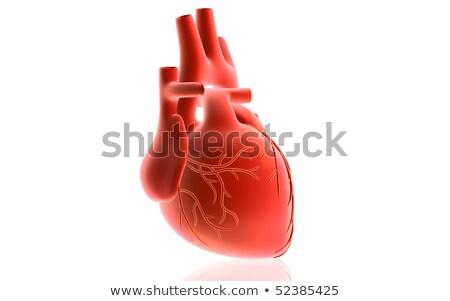 3D · медицинской · иллюстрация · сердце · дизайна - Сток-фото © maya2008