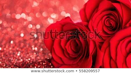 kırmızı · gül · yaprakları · vektör · dizayn · yaprak · güzellik - stok fotoğraf © bluering