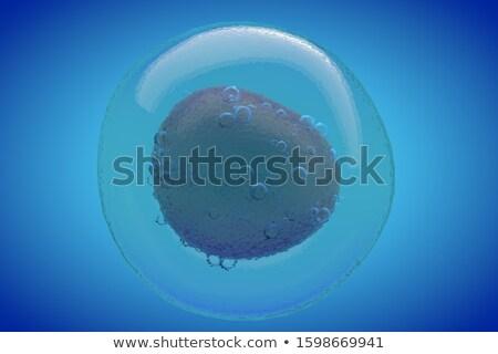 Sperma ei cel 3d illustration Blauw gezondheid Stockfoto © tussik