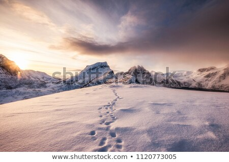 Ayak izleri kar soyut kış buz ayak Stok fotoğraf © stevanovicigor