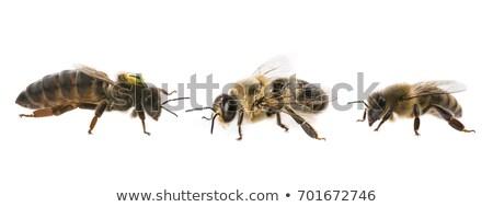 Biene Königin Bienenstock Illustration Familie Natur Stock foto © adrenalina