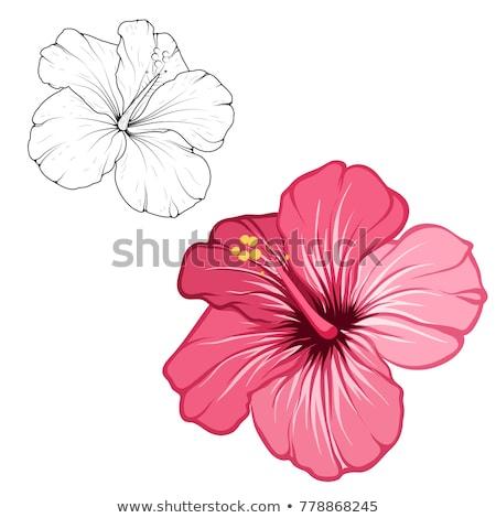 hibiscus · bloem · vector · Rood · bladeren · geïsoleerd · witte - stockfoto © frescomovie