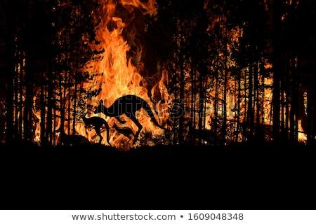ardente · floresta · pôr · do · sol · noite · cérebro · preto - foto stock © blamb