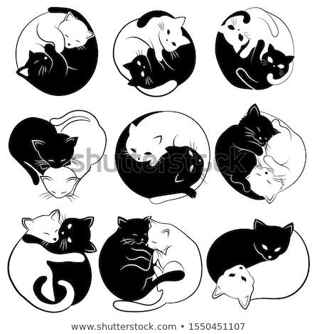 Aranyos yin yang macskák vektor szett felirat Stock fotó © beaubelle