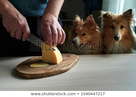 animal dog man_cooking Stock photo © toyotoyo