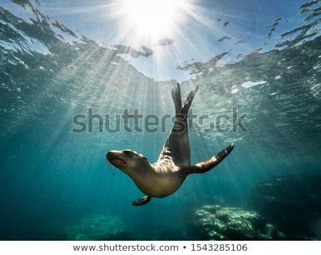 profundo · mar · pescador · peixe · água · escolas - foto stock © bluering