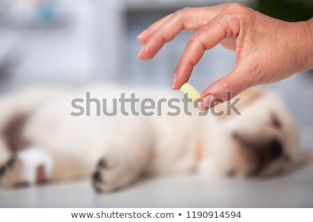 woman hand holding medication for veterinary purposes   sleeping stock photo © ilona75