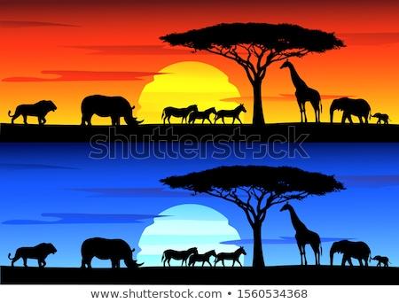Silhouette background with rhino under the tree Stock photo © colematt