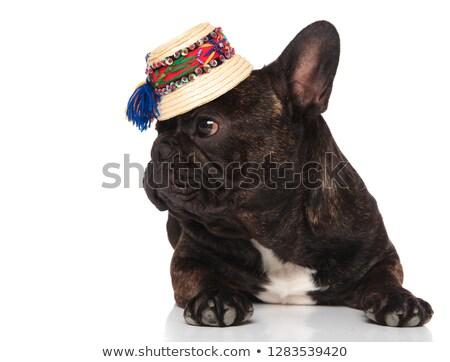Curioso francés bulldog sombrero de paja Foto stock © feedough