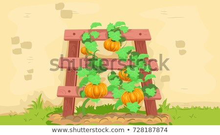 Trellis Wall Squash Vines Illustration Stock photo © lenm