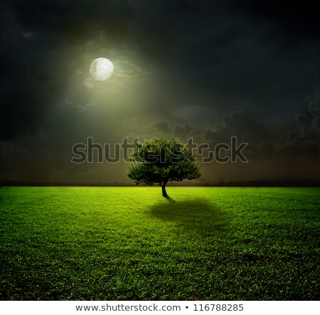 rural scene at night stock photo © bluering
