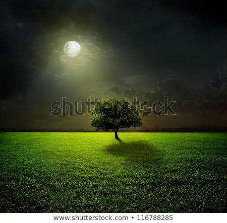 rural scene at night stock photo © bluering