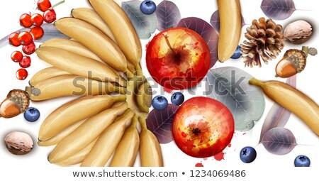 バナナ リンゴ ブルーベリー 果物 ベクトル 水彩画 ストックフォト © frimufilms