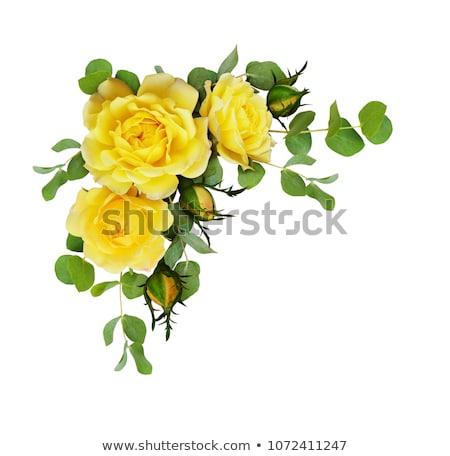 букет · желтый · роз · белый · весны · закрывается - Сток-фото © Melnyk