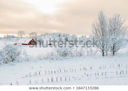 Granja escena naturaleza granero ilustración diseno Foto stock © bluering
