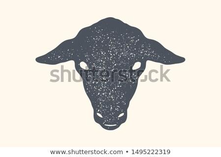 cordeiro · quibe · cartaz · carne · compras · vintage - foto stock © foxysgraphic