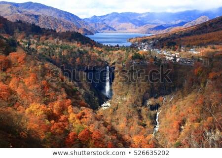 Najaar vallen landschap Japan plateau veld Stockfoto © vichie81
