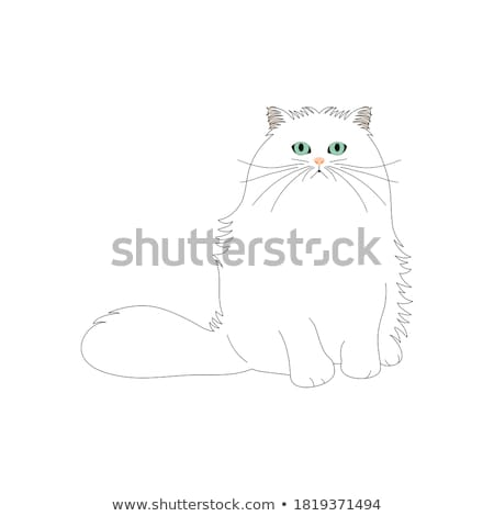 fluffy cat cartoon character coloring book Stock photo © izakowski