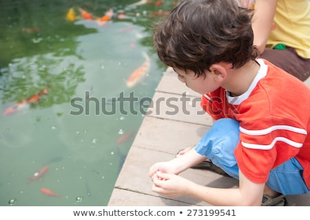 Young boys feeding koi carps in the pond Stock photo © galitskaya