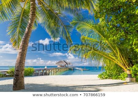 üres trópusi tengerpart díszlet illusztráció fa gyermek Stock fotó © bluering