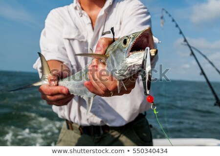 Stock photo: fishermans catch of mackerel