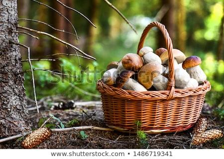 Wild bos champignons foto veld park Stockfoto © 3523studio