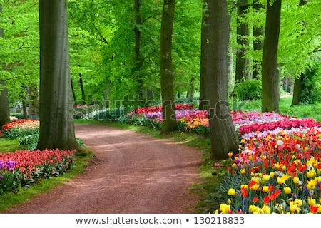 beautiful hyacinth flowers in garden in spring Stock photo © juniart