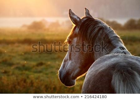 Naplemente ló közelkép halszem lövés kamera Stock fotó © macropixel
