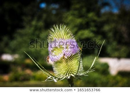 Printemps nature été vert parc croissant Photo stock © arturasker